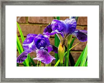 An Iris Blessing Framed Print by Jon Woodhams