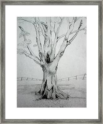 An Old Tree Framed Print by Stacy C Bottoms