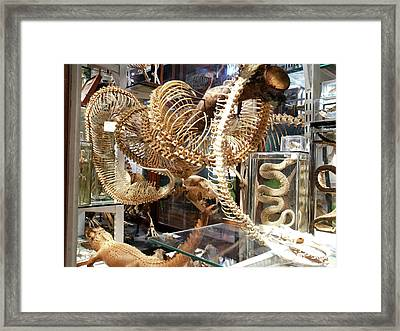 Anaconda Skeleton Framed Print by Ucl, Grant Museum Of Zoology