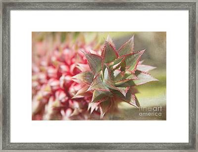 Ananas Comosus - Pink Ornamental Pineapple Framed Print by Sharon Mau