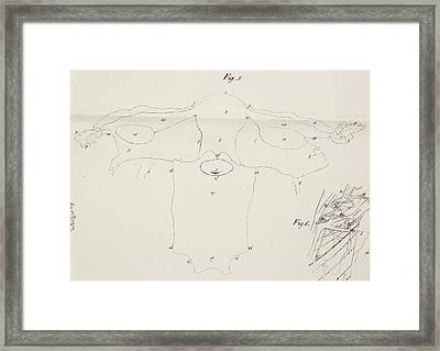 Anatomical Drawing. Uterus And Ovaries Framed Print by British Library