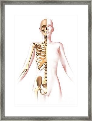 Anatomy Of Female Body With Skeleton Framed Print by Leonello Calvetti
