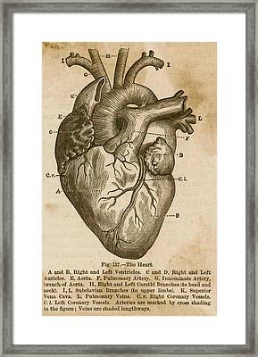 Anatomy Of The Heart Framed Print by Doc Braham
