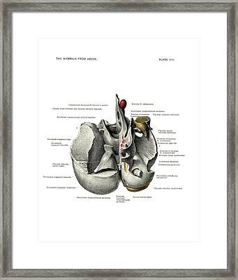 Anatomy Of The Midbrain Framed Print by National Library Of Medicine