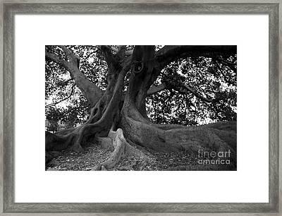 Ancestor Framed Print by Amanda Barcon