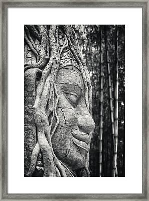 Ancient Buddha Stone Head Framed Print by Adam Romanowicz