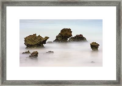 Ancient Coral Framed Print by Adam Romanowicz