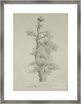 Ancient Oak Tree With A Storks Nest Framed Print by Caspar David Friedrich