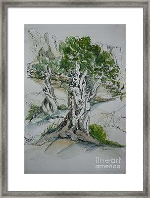 Ancient Olive Grove Framed Print by Therese Alcorn