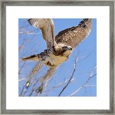 And Away I Go Square Framed Print by Bill Wakeley