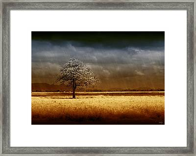 And The Rains Came Framed Print by Holly Kempe