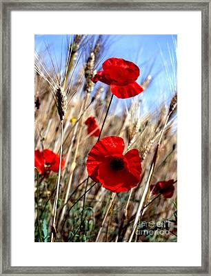 And Then They Mowed A Tuscan Field Framed Print by Anna Lisa Yoder