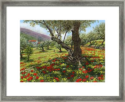 Andalucian Olive Grove Framed Print by Richard Harpum
