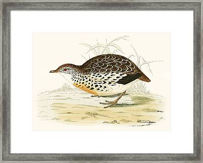 Andalusian Quail Framed Print by Beverley R. Morris