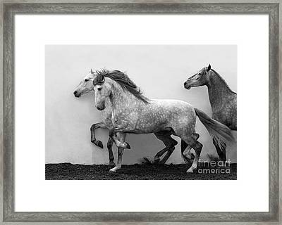Andalusians In Step Framed Print by Carol Walker