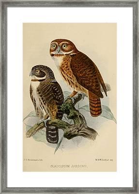 Andean Pygmy Owl Framed Print by J G Keulemans
