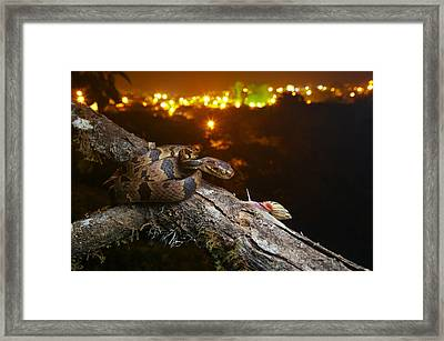 Andean Snail-eater Female And Land Framed Print by James Christensen