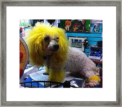 Andrew The Poodle Framed Print by Saundra Myles