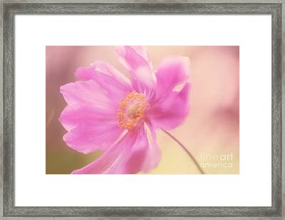 Anemone Flower Wash Framed Print by Natalie Kinnear