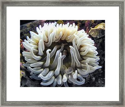 Anenome 1 Framed Print by Dawn Eshelman