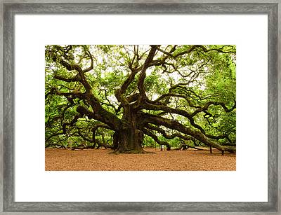 Angel Oak Tree 2009 Framed Print by Louis Dallara