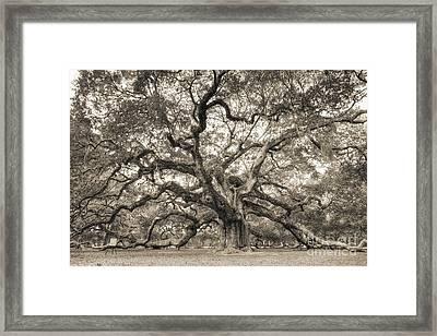 Angel Oak Tree Of Life Sepia Framed Print by Dustin K Ryan