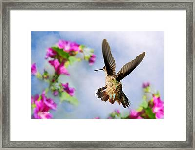 Angel Wings  Framed Print by Christina Rollo