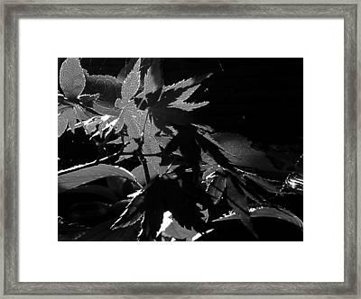 Angels Or Dragons B/w Framed Print by Martin Howard