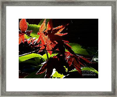 Angels Or Dragons Framed Print by Martin Howard