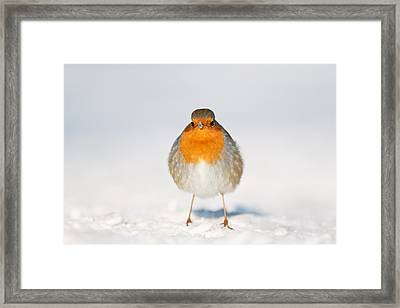 Angry Bird _ Robin In The Snow Framed Print by Roeselien Raimond