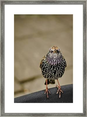 Angry Bird Framed Print by Heather Applegate