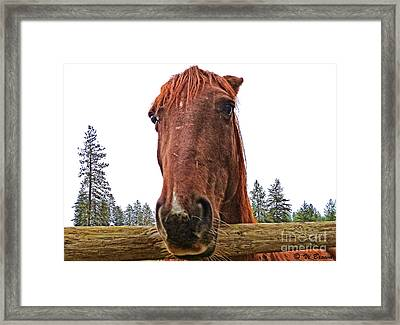 Angry Stallion Framed Print by Vi Brown