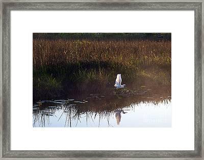 Anhinga Trail Sunrise Framed Print by Bruce Bain