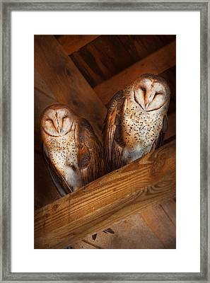 Animal - Bird - A Couple Of Barn Owls Framed Print by Mike Savad