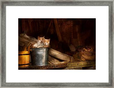 Animal - Cat - Bucket Of Fun  Framed Print by Mike Savad