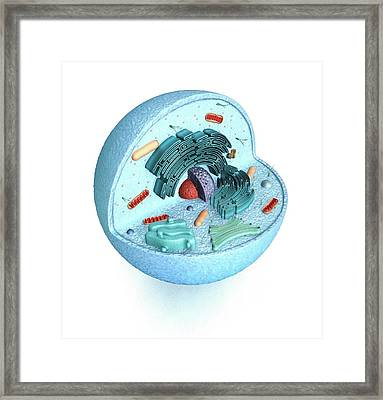 Animal Cell Framed Print by Mikkel Juul Jensen