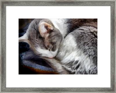 animals - cats - Cat Nap Framed Print by Ann Powell