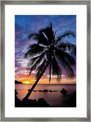 Anini Palm Framed Print by Adam Pender