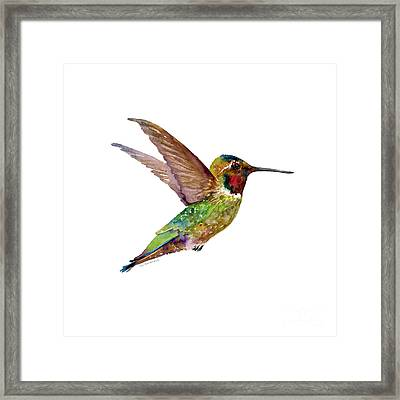 Anna Hummingbird Framed Print by Amy Kirkpatrick