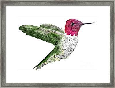 Annas Hummingbird Framed Print by Roger Hall