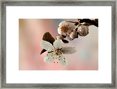Announcing Spring Framed Print by Mary Jo Allen