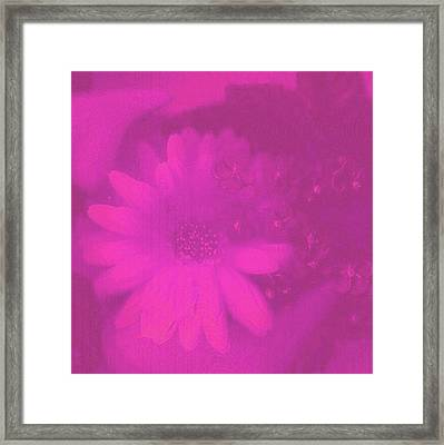 Another Color Suprise Framed Print by Pepita Selles