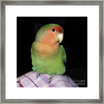 Another Knee Pickle Framed Print by Terri Waters