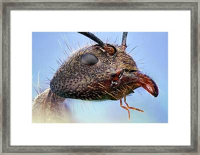 Ant Head Framed Print by Nicolas Reusens