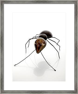 Ant Framed Print by Lawrie Simonson