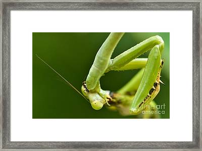 Ant Vs. Mantis Framed Print by Charles Dobbs