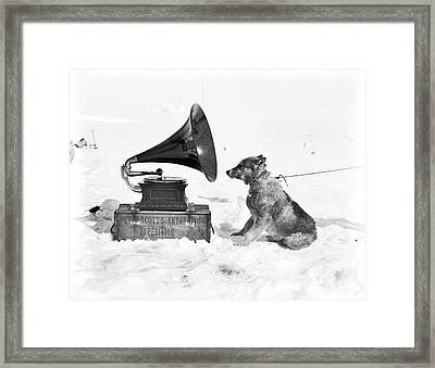 Antarctic Sled Dog And Gramophone Framed Print by Scott Polar Research Institute