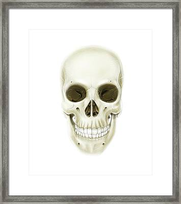 Anterior View Of Human Skull Framed Print by Alan Gesek