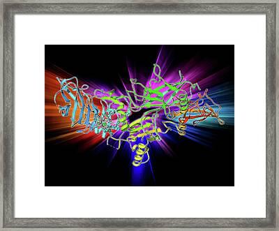 Anthrax Protective Antigen Molecule Framed Print by Laguna Design