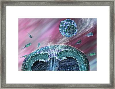 Antibiotic Destroying Bacteria Framed Print by Nicolle R. Fuller